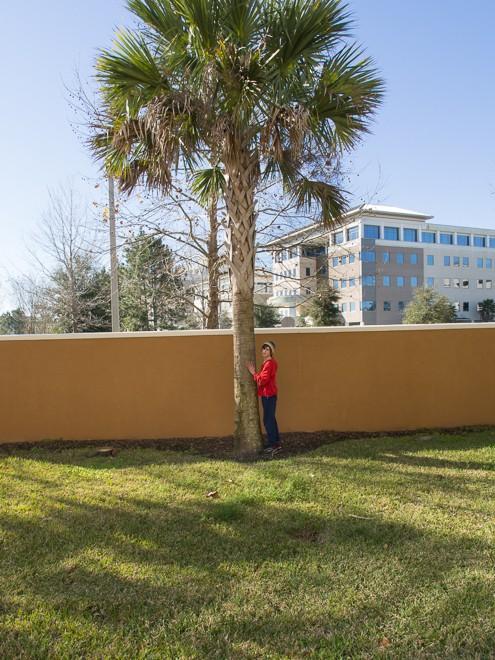 J Amp The Palm Tree Jacksonville Fl Feb 2014 Michael