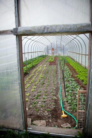 Greenhouse Portal (Nov 2011)