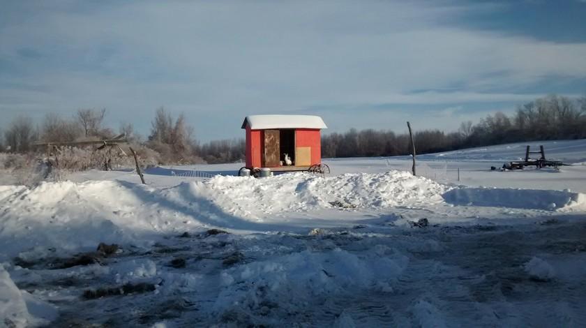 Winter Morning Chicken Coop, Ithaca, NY (Jan 2015)